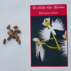 5 bulbs - Habenaria radiata - White Egret Flower