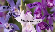 Black Friday - The best offer of the year with 10 to 50% discounts...